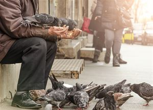 Reducing pigeon numbers in towns and cities  - homeless man feeding birds